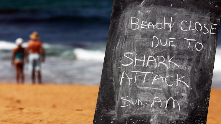When sharks attack: how councils try and contain the fear