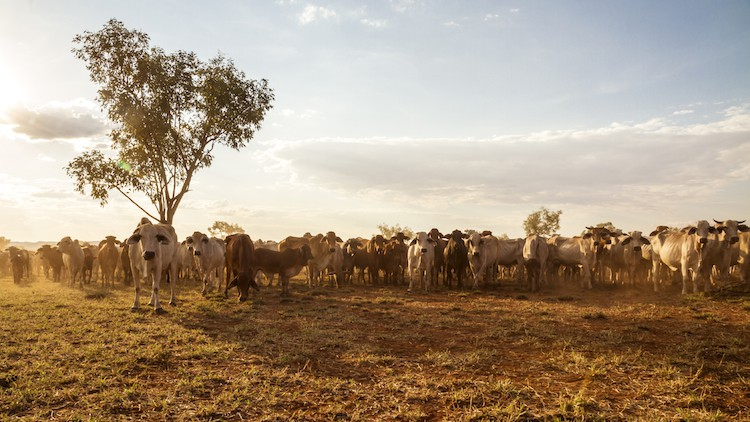 WA Ag Department banks on corporate alliance for farming