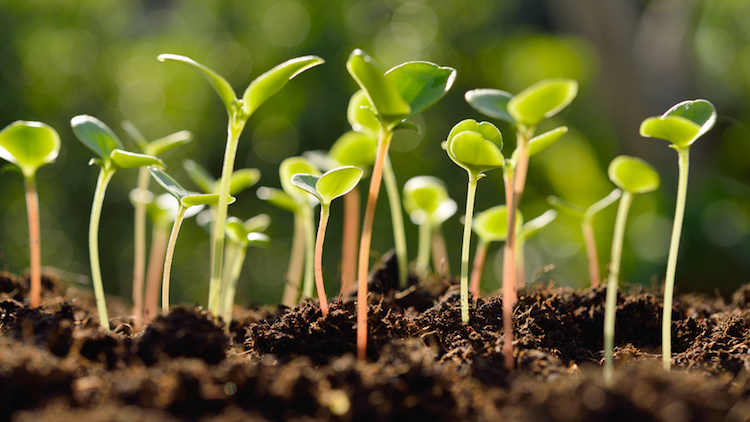 Collaboration prepares fertile ground for green shoots of innovation
