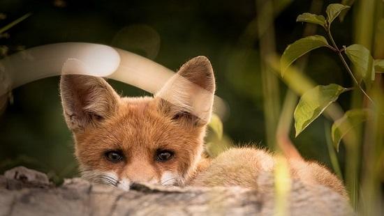 Should public servants be foxes or hedgehogs?