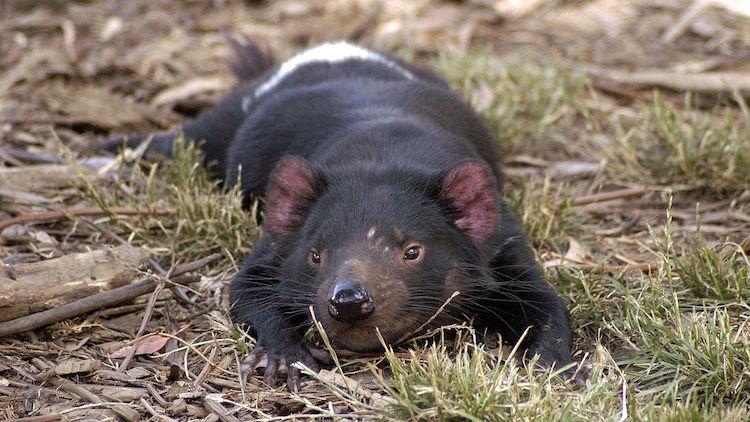 Australia's species need an independent champion