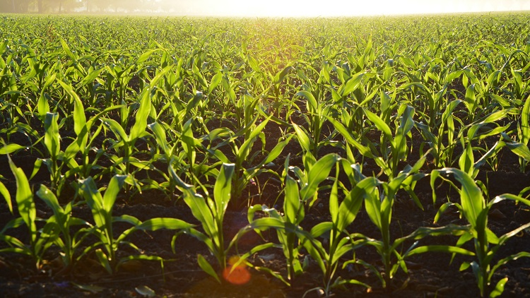 Agricultural agency is no poster child for public service decentralisation