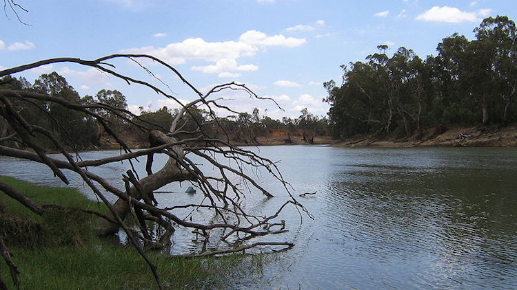 Murray-Darling Basin Authority digs in against royal commission, full response weeks away