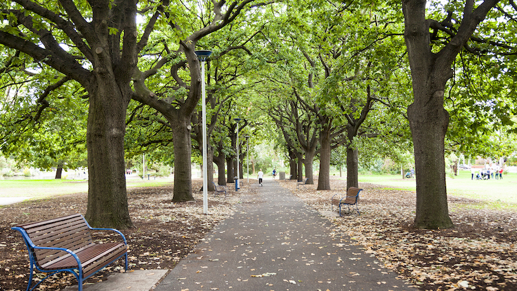 Urban forests: how trees can fight heatwaves and poor health