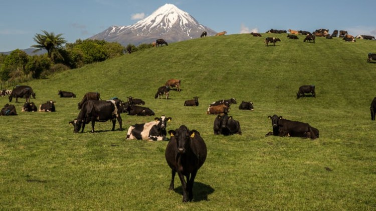 NZ introduces groundbreaking zero carbon bill, including targets for agricultural methane