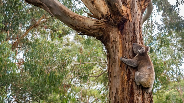 Australia must move on from its outdated environment laws
