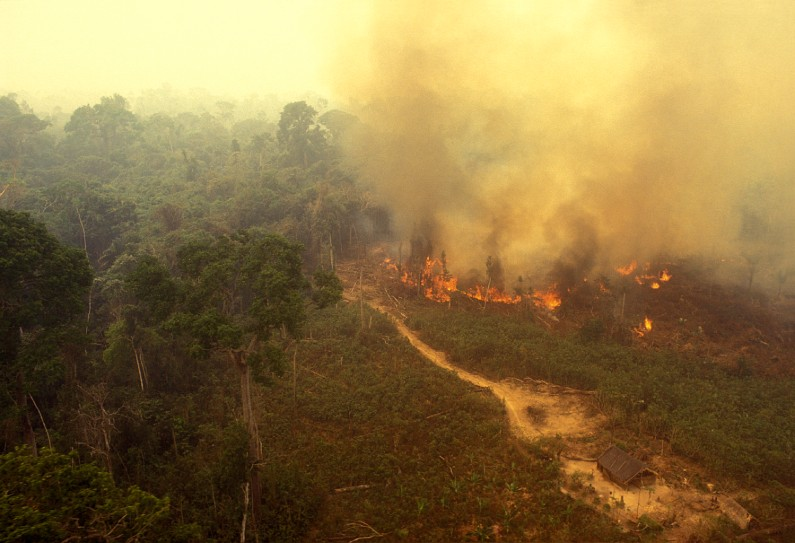 The Amazon is on fire – here are five things you need to know