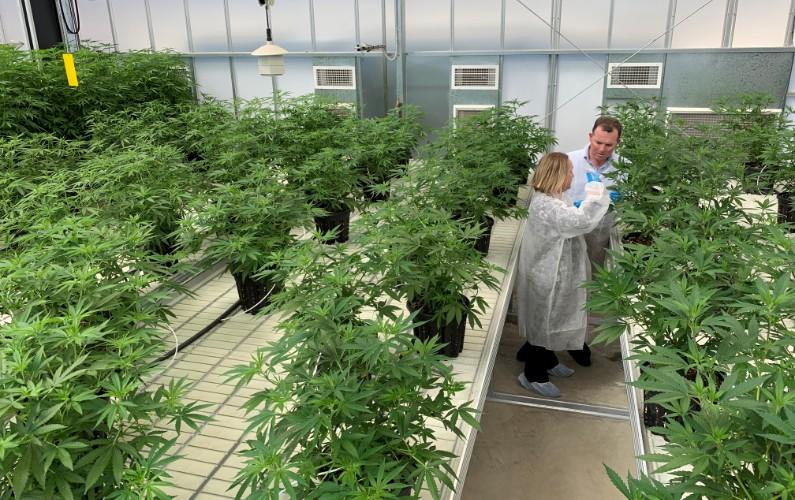 NSW and Commonwealth buying into bud
