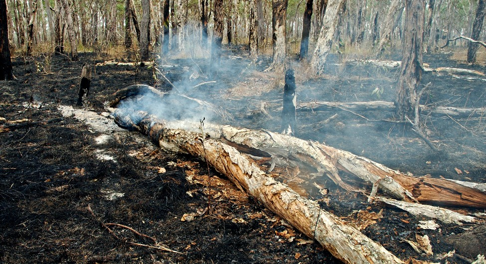 Planned burns rather than expensive aircraft will lower the cost of bushfires