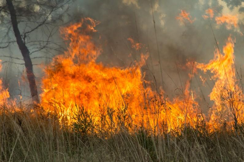 Deputy premier blames national parks agency for not doing enough on bushfire prevention, again