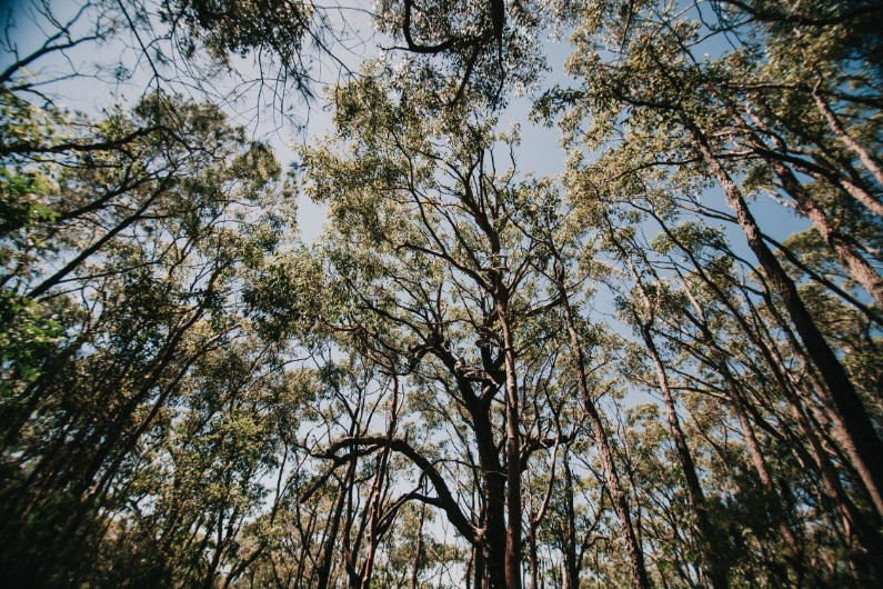 NSW scraps forest privatisation plan