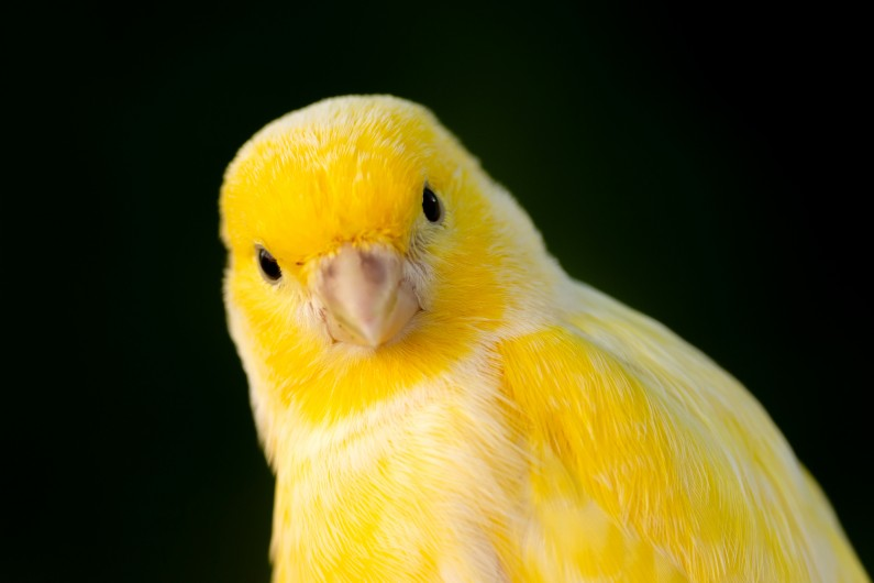 Canary in a coalmine: what Australia looks like from afar