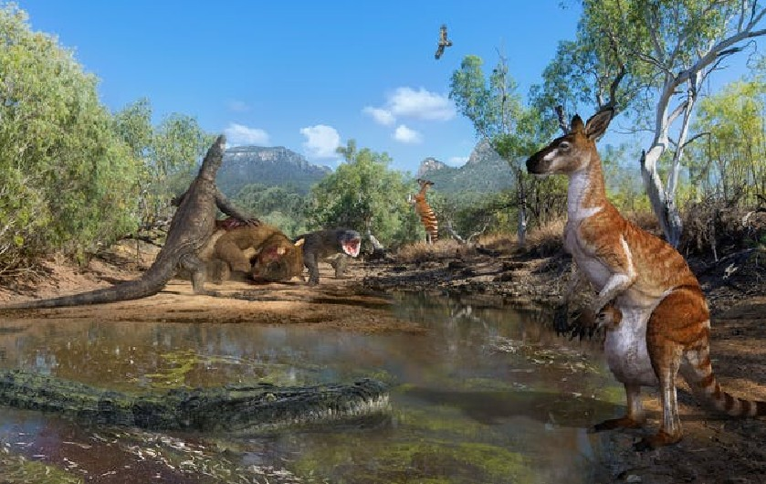 Humans coexisted with three-tonne marsupials and lizards as long as cars in ancient Australia