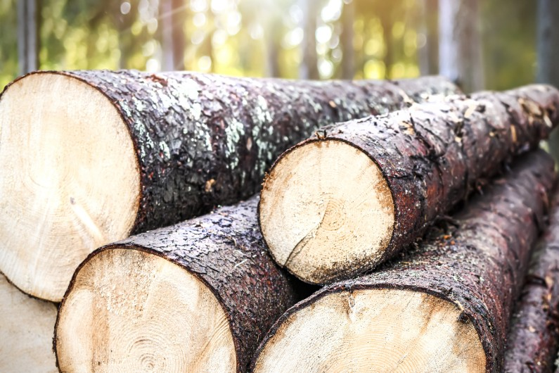 What happened when a public institute became a de facto lobbying arm of the timber industry