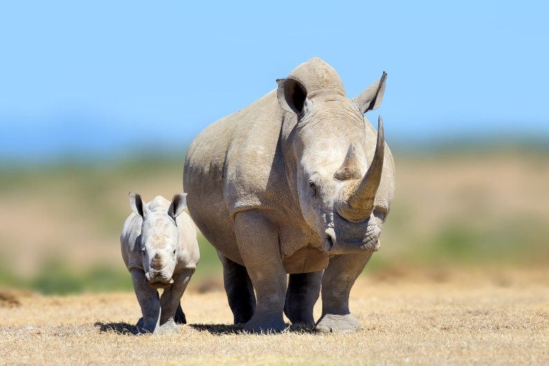 Nine of the most shocking facts about global extinction – and how to stop it