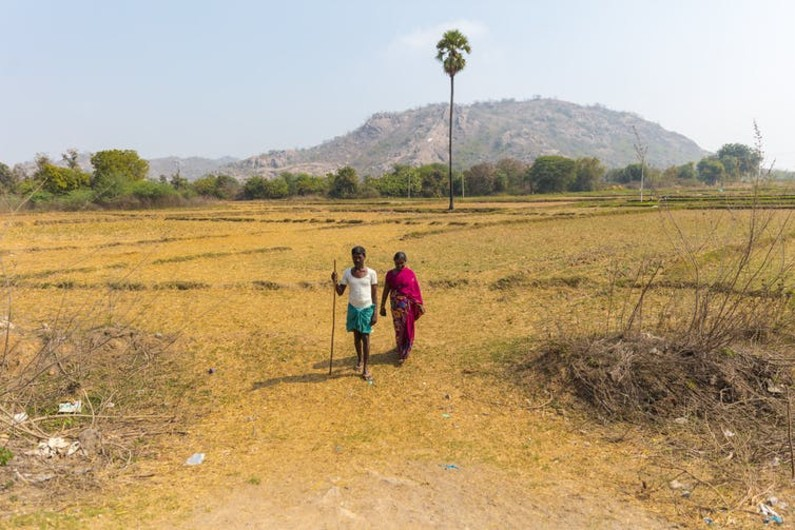 India protests: farmers could switch to more climate-resilient crops – but they have been given no incentive