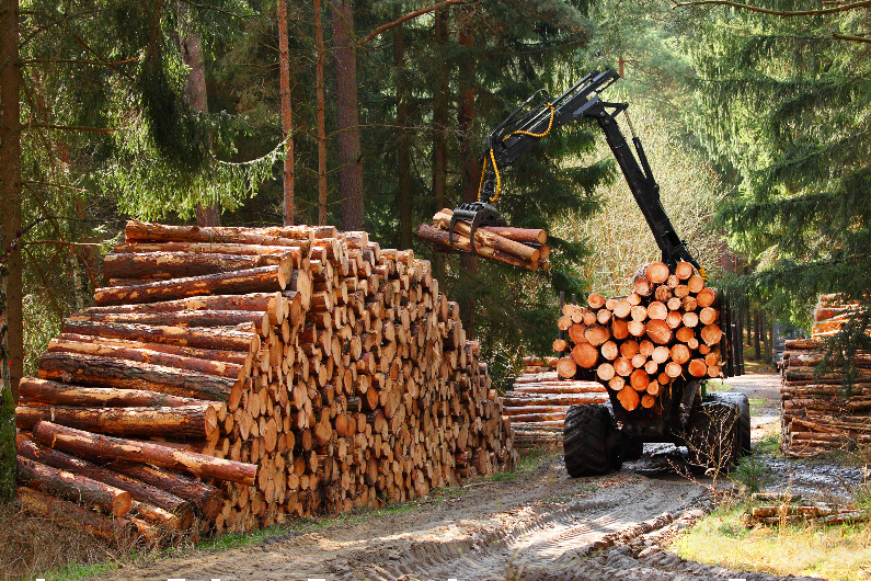 'We have counties in deep trouble': Oregon lawmakers seek to reverse timber tax cuts that cost communities billions