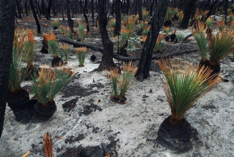 Burgeoning recoveries from Australia's largest ever bushfire