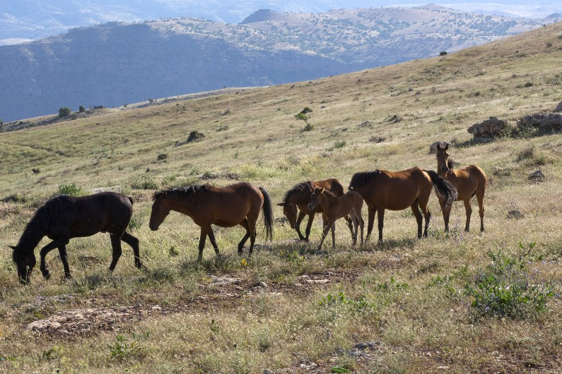 Community clashes over feral horses management