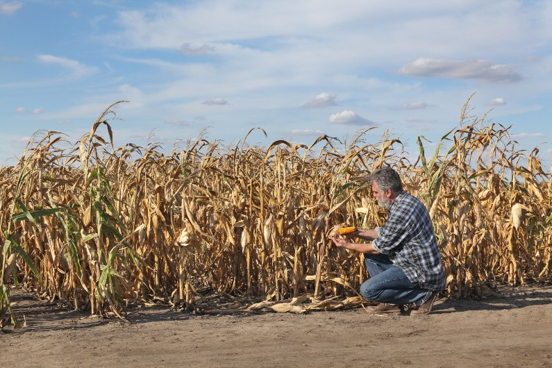 New programs to help farmers and communities build drought resilience
