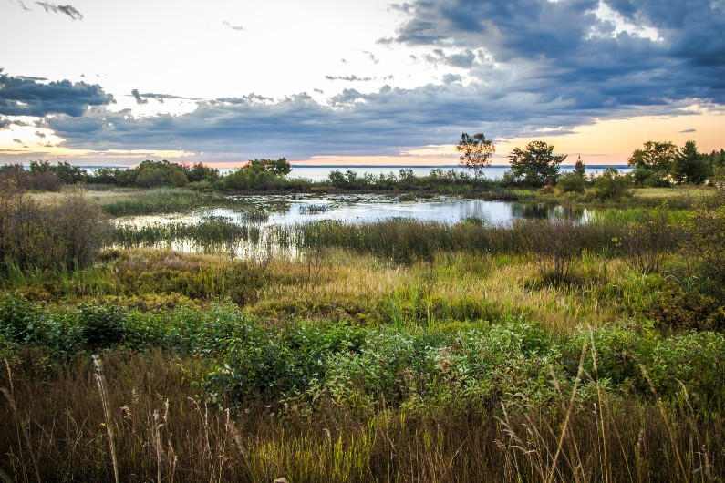Anti hunting lobby cries foul over Victoria's wetland bird records
