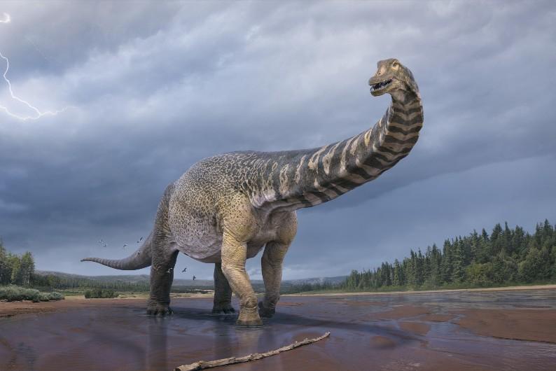 Artists' impression shows the Australotitan cooperensis, or the southern titan, dinosaur.