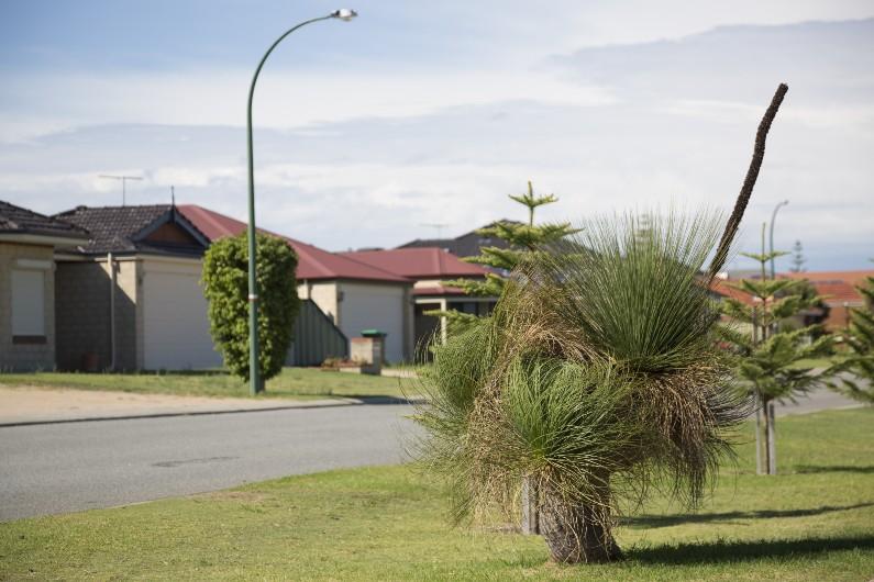 WA seeking 'balance' in medium-density development planning