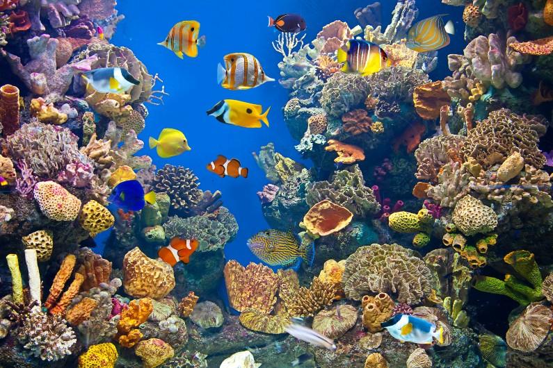 ocean-marine-sea-biodiversity