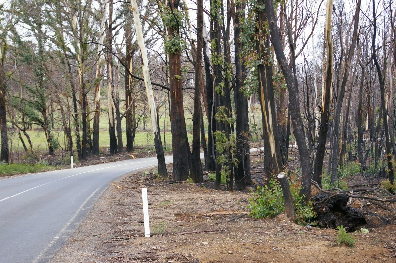 Assessment app, evacuation tool among bushfire projects to receive $4.2m