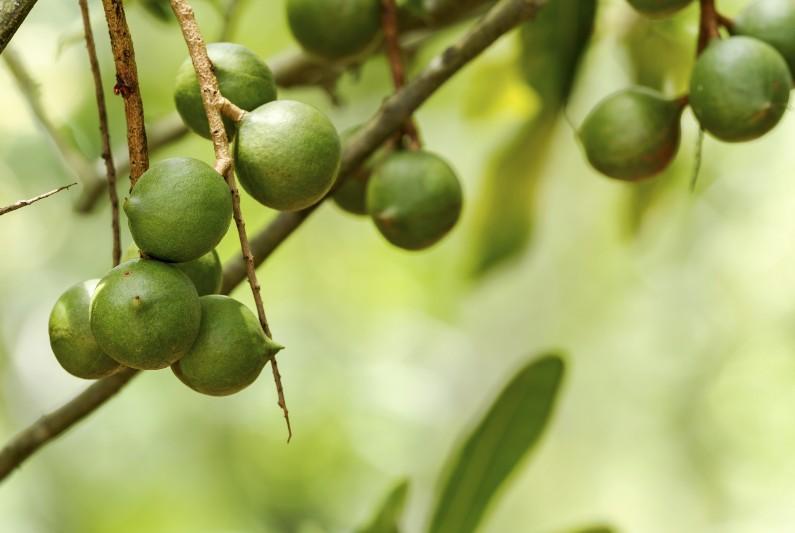 Grants help Queensland macadamia farmers to grow customer base