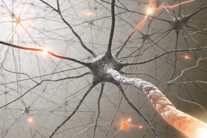 Government backs study into brain health