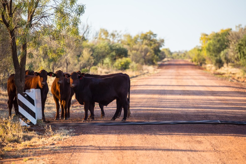 Infrastructure upgrade for Queensland stock routes