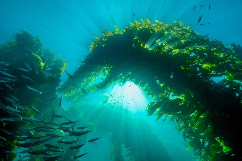 Are mangroves and seagrasses the key to net emissions reduction?