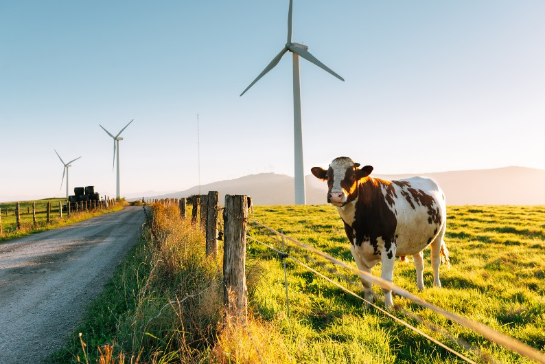 Case for farmers to be included in net zero target