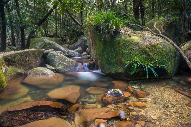 Australia's most iconic rainforest returned to Aboriginal people